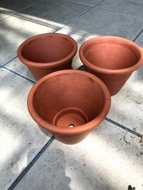 胡蝶蘭を鉢に植え替えました。