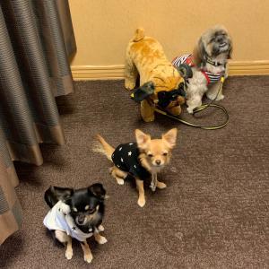 犬のタッチケア教室 「大好き」のルーティン