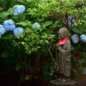 青梅雨滴る二本松市高林寺