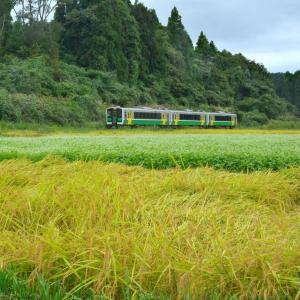 柳津町細八、小雨模様のソバ畑と只見線