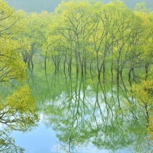 新緑萌ゆる飯豊町、白川ダム湖岸公園
