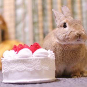 おこげ2歳のお誕生日