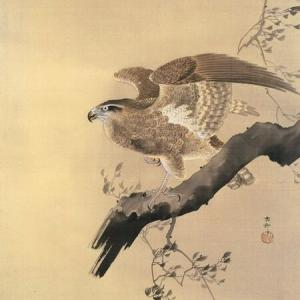 鷹学を習う (たかわざを ならう)七十二候三十三候