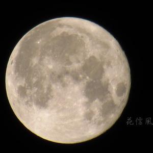 立待月(たちまちづき)