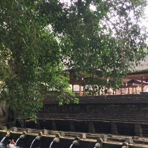 満員御礼!沐浴に最適な日のティルタウンプル寺院