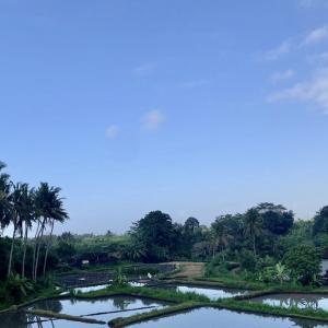 バリ島の癒される景色