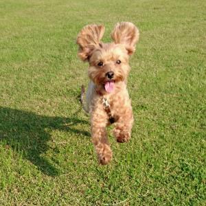 あなたが犬を飼う理由/犬を飼っている人はより健康になれる