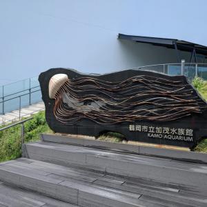 日本一周【118日目】クラゲ水族館