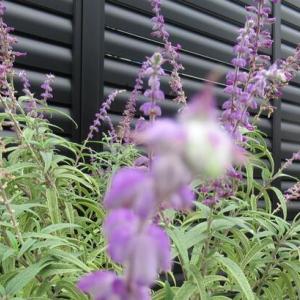 9月17日 散歩中に見かけた花