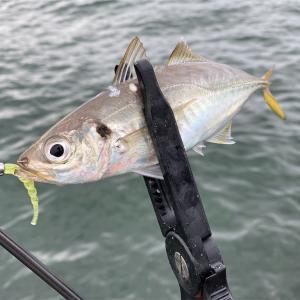 釣りは少し難しいくらいが丁度いい。