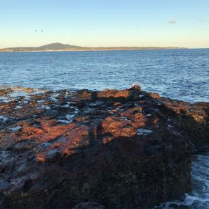 魚が根や海藻に入った時の対処法