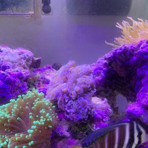 サンゴ追加