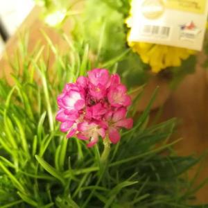 南仏のかわいい花♡ブドウ畑におさんぽへ