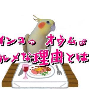 インコ・オウムは鳥類界のグルメ王!?甘党、辛党?好みの味覚とは?【きなこ日記】