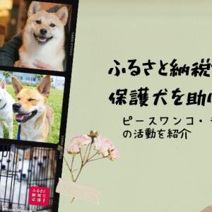 ふるさと納税で保護犬を助けられる!ピースワンコ・ジャパンの活動紹介