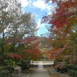 【兵庫県西宮市】甲山森林公園と船坂里山学校の紅葉