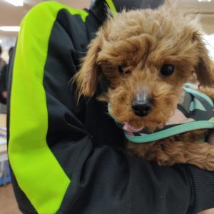 保護犬を迎え入れることになりました!&今後のブログ更新について