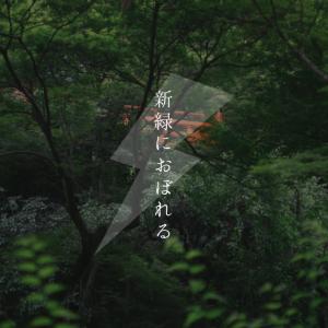 【おそとのええとこ】新緑におぼれる【京都-北野天満宮】
