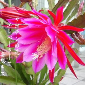 サボテンの花で