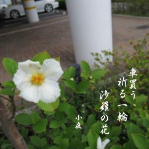 沙羅の花で