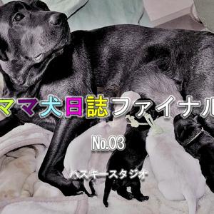 033: ソース公開-03 CnnExecute関数(Excel←→Access)