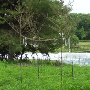 地鎮祭の斎竹  Saitake for Shinto ceremony of purifying a building site