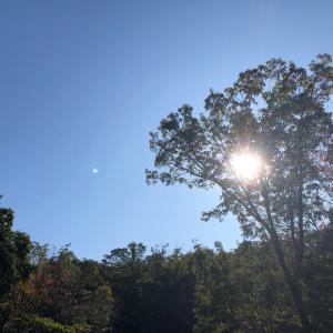素晴らしき秋の1日