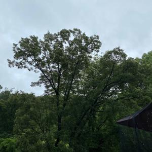 雨の日は元気を出さなくてもいい日、そんな気がする