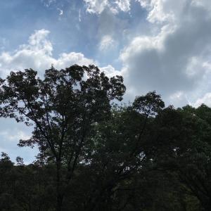梅雨明け❗️は昨日か。アウトドアステッチ2日目