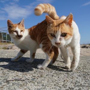 GoTo島猫 ひさしぶり