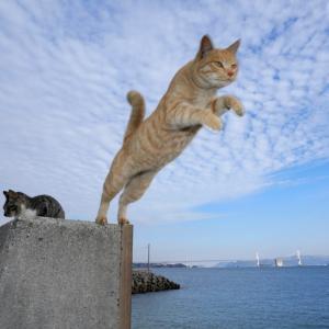 猫JUMP 茶トラ