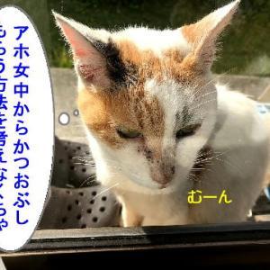 猫漫画「かつおぶしとたぬきのおじちゃん」