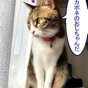 猫漫画「今年最初の訪問者」