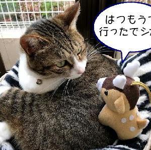 猫漫画「神の使い、あらわる」
