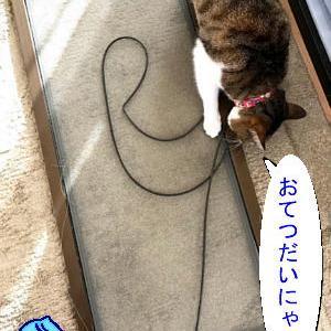猫漫画「チコちゃんのおてつだい」