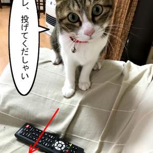 猫漫画「チコちゃん、遊ぶの大好き」