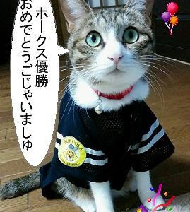 猫漫画「ソフトバンクホークス優勝おめでとう」だが・・・
