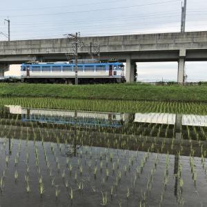 水鏡「水田に映る貨物列車とか電車とか」撮り鉄