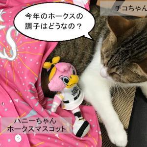 猫漫画「チコちゃんとハニーちゃん その2」