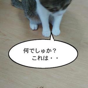 猫漫画「セミの抜け殻とチコちゃん」