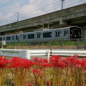 撮り鉄「彼岸花と817系電車」