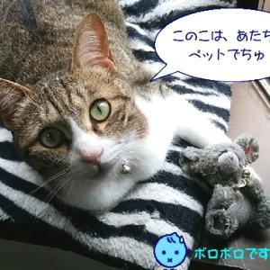猫漫画「チコちゃんのペット」
