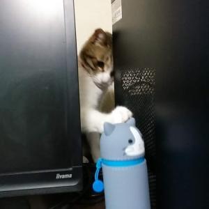 猫漫画「パソコンのじゃまをするチコちゃん」