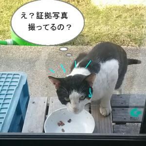 猫漫画「白黒猫の登場」