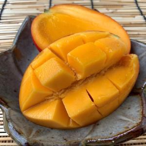 今年初マンゴーは台湾産!屏東の愛文芒果(アップルマンゴー)は収穫期!