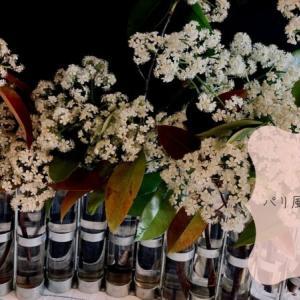 花のある暮らし~昭和のなつかしい花をみなおした