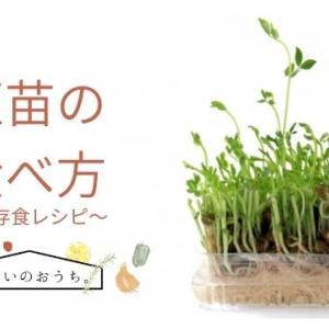 豆苗の食べ方 生や炒めて栄養が変わる?