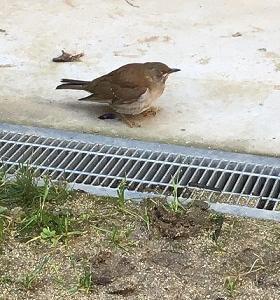 飛び立った鳥さん