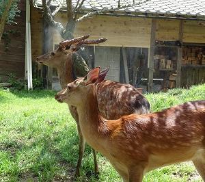 ミストシャワー日和と動物福祉のこと