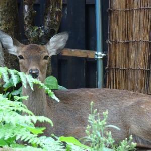 鹿ののぞみちゃんのはなにハナ